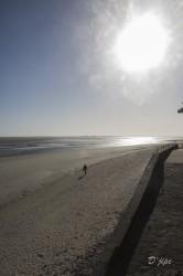 Baie de Somme, juin 2013